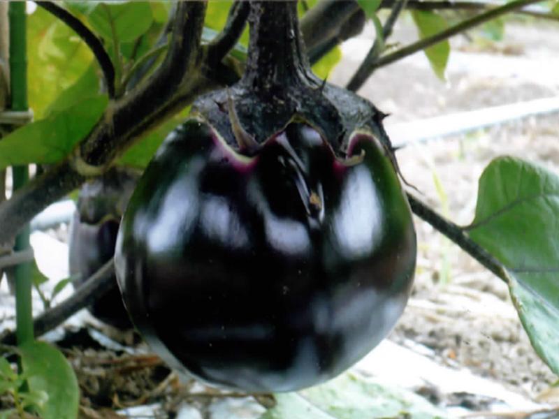 伝統野菜と郷土料理