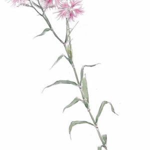 石川功一の水彩・油彩展 和歌に詠まれた草花たち